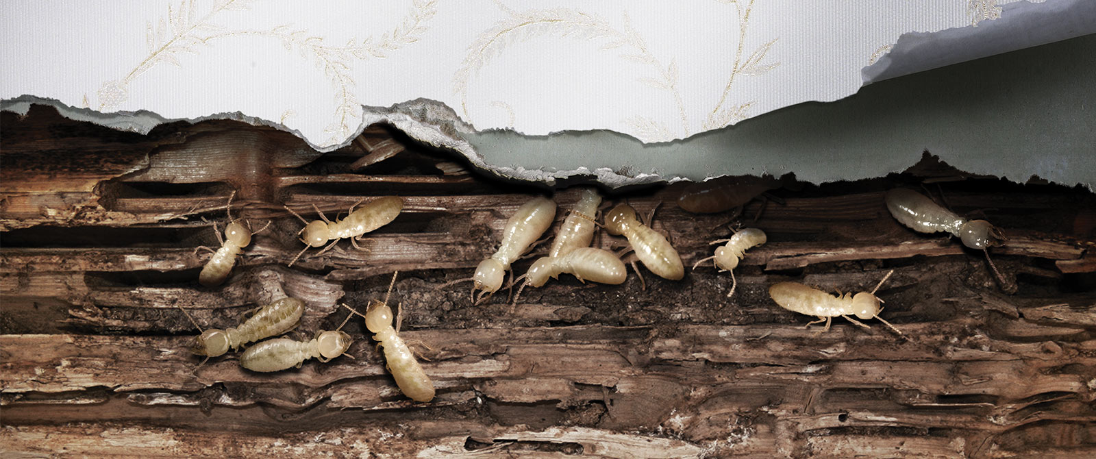 Termites Inside the Wall