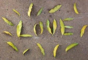 word love made with leaves