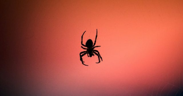 spider hanging off a web