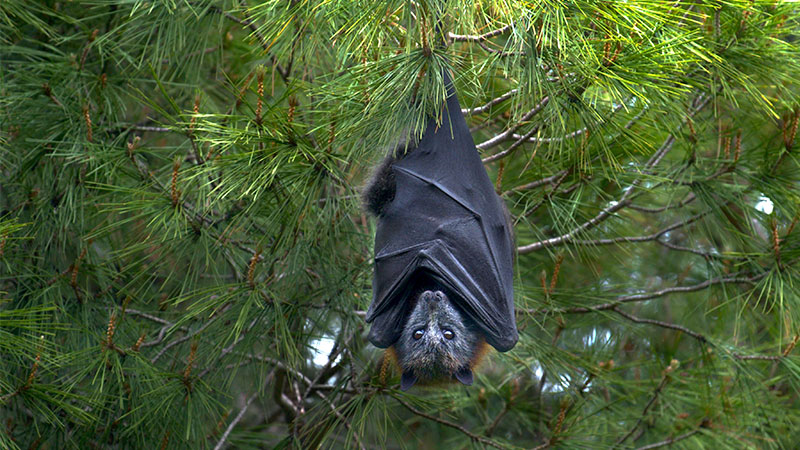 bat hanging on the tree