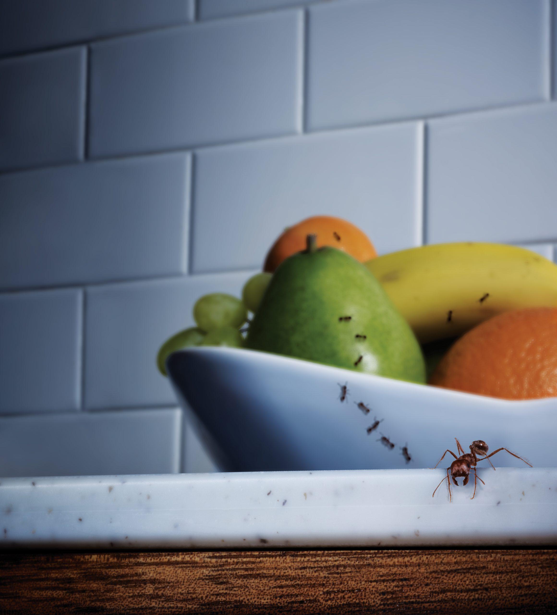 pantry pests on fruit