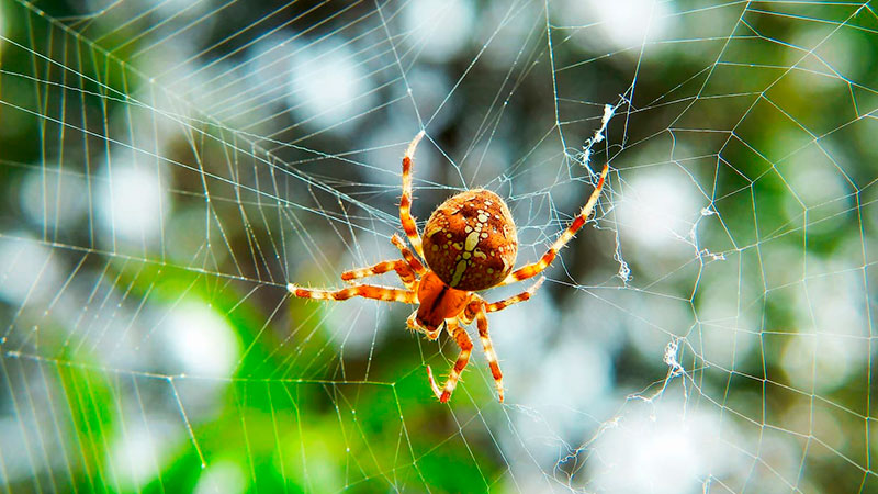 orange spider on a spider web